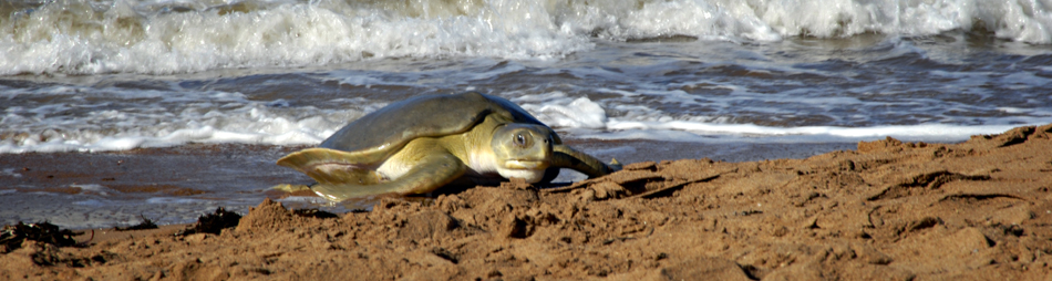 Exit turtle-haven Hedland: en route to Kalbarri