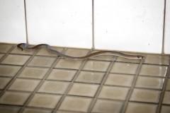 Episode 5 | Alice Springs snake encounter