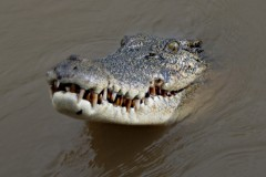 Episode 7 | Crocs and Christmas in Darwin